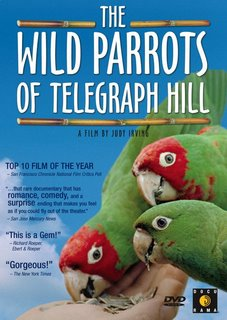 Wild Parrots of Telegraph Hill DVD