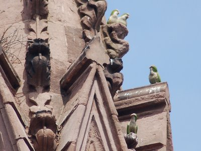 These parrots appear to be part of a surveying team examining the functional specifications for an adequate nest sub-structure at Green-Wood's main gate.