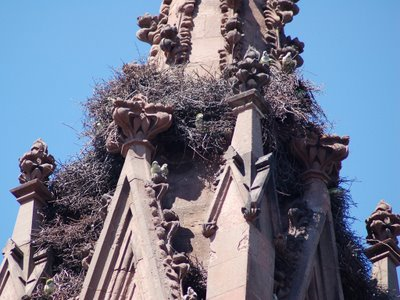 You can clearly see the area cleared by the renovation workers at the center of the photo (below the perching parrots). First an inspection will take place to assess any damage to the stone (there doesn't look like any in this photo), followed by necessary renovation work.