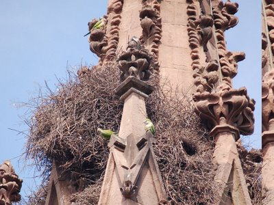 Monk parrot nests integrate well with the visual elements of Greenwood Cemetery gate.