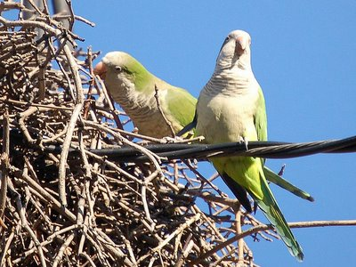 Two parrots on top of nest on Avenue I and 27th Street