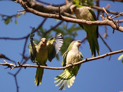 Watching Wild Parrots Is Good For Your Brain