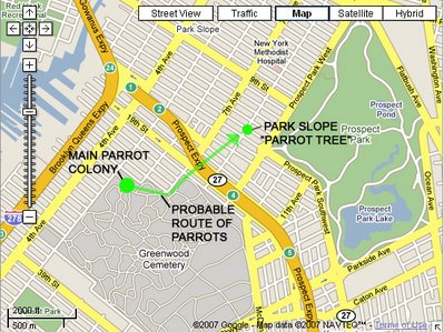 PROBABLE ROUTE OF PARK SLOPE PARROTS