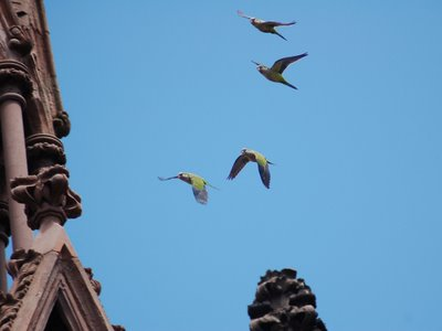 There's plenty of action at the central spire, formerly the site of the biggest parrot nest in Brooklyn.