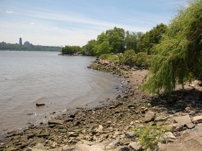 Edgewater's rocky beaches are a favorite stomping grounds for wild monk parakeets