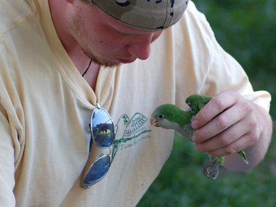 Paul, of FosterParrots.com, comforts a recovered wild Quaker Parrot at the Throggs Neck Little League baseball field. July 7, 2007