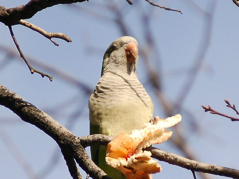 Brooklyn: Land of the Pizza-Eating Parrots! - 07020 Forums