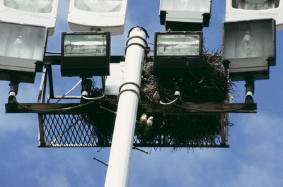 Brooklyn College Light Tower with Parrot Nest, 2005