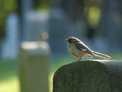 Bird on Gravestone, Green-Wood Cemetery, Brooklyn, NY