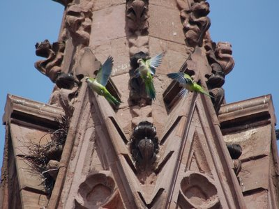 But the parrots have been busy all week, and a nest is beginning to take shape (just to the left in this photo).