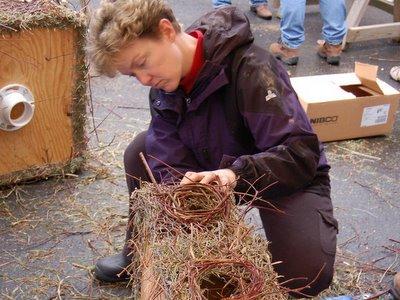 Quaker Parrot Nest Construction, Fairfield, Connecticut, January 7, 2004