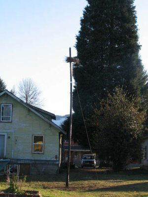 <br />An alternative nest platform constructed in Yacolt Washington for the wild quaker parakeets made homeless by the Clark Public Utilities Department in late 2007